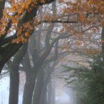 autumn, avenue, baumallee