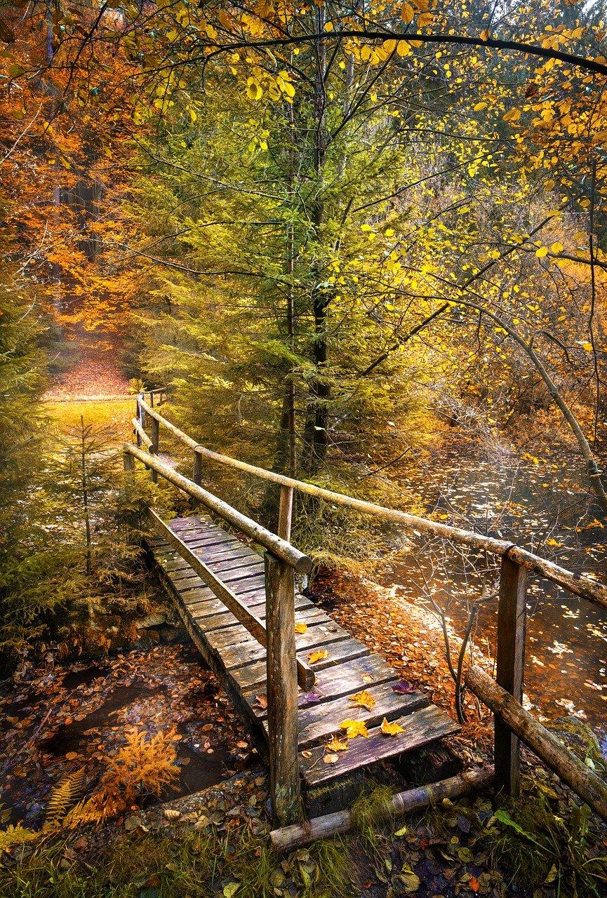 bridge, leaves, foliage